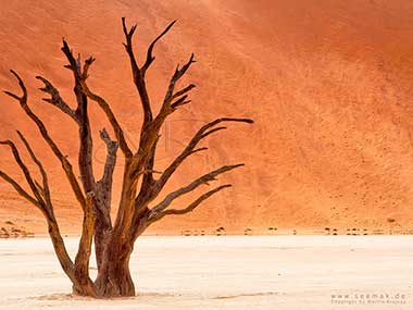 Tree in Sossusvlei